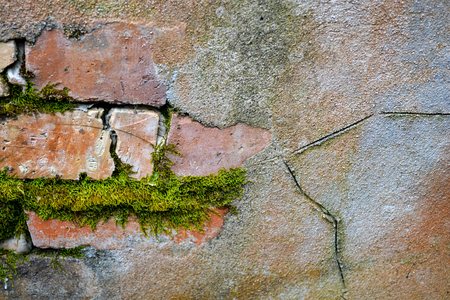 old wall in detail showing aging and lichen and moss growing through cracks