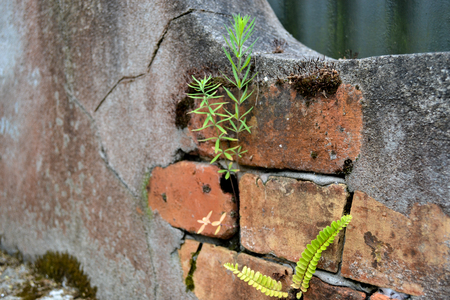 Brick and cement wall with lichen as a background