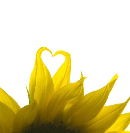 Sunflower Love photo