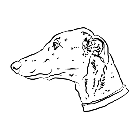 Charismatic greyhound. Portrait of dog silhouette. Vector illustration. Illusztráció
