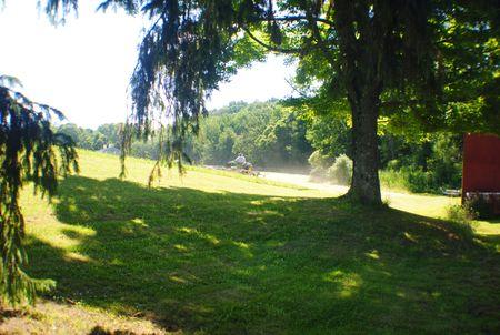 日陰の木 写真素材