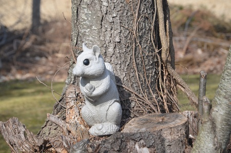 Squirrel on a stump