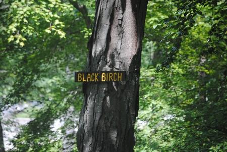 Tree sign Stock Photo