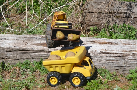 Toy trucks photo