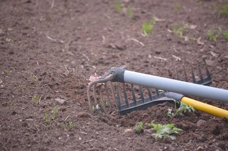 Two garden rakes