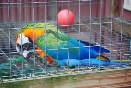 Un loro en una jaula Foto de archivo - 13705320