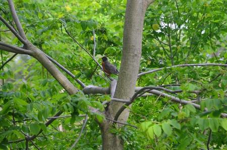 Een roodborstje in een boom Stockfoto