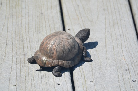 A small turtle Stock Photo