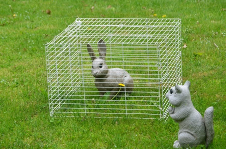 rabbit cage: Squirrel looking at rabbit in a cage