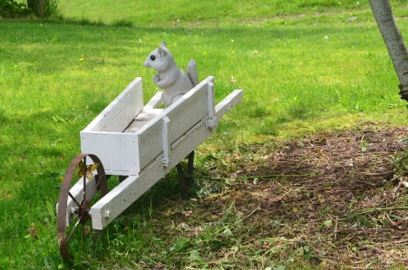 Squirrel in a wheelbarrow photo