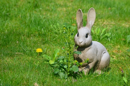 Rabbit on the lawn