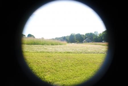 hay field: Campo di fieno da tagliare