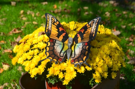 A butterfly on a bunch of yellow  flowers