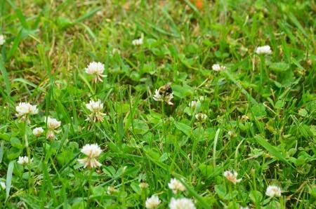 Bee on a flower Reklamní fotografie