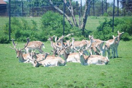 spoted: Herd of spoted deer