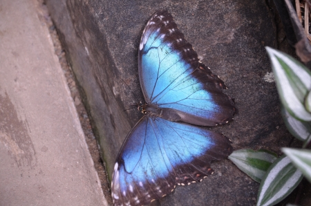 Colorful wing span of a butterfly Stock Photo - 17478647