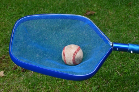 Baseball in pool skimmer net