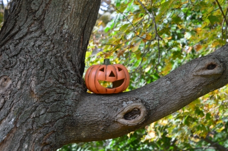 Pumpkin in a tree