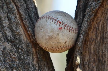 limbs: A baseball stuck in tree limbs