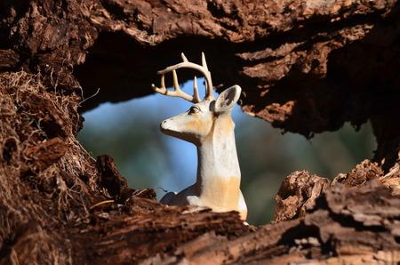 Deer resting in tree hollow