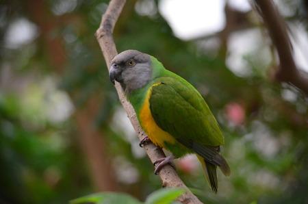 animal limb: Green and yellow parrot