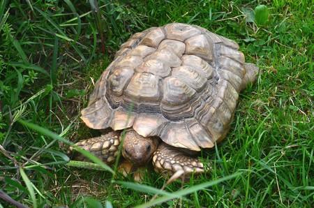 草の中の Tortois