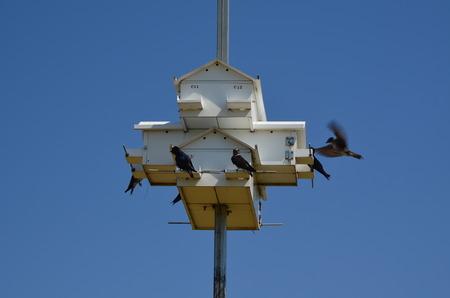 Purple Martin bird house