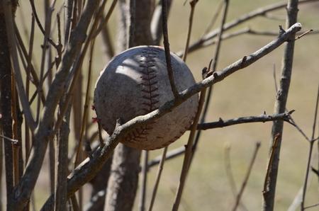 Baseball in a bush