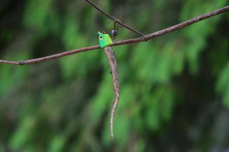 animal limb: Fishing lure Stock Photo