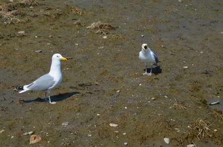 Two Seagulls on the shore Stock Photo