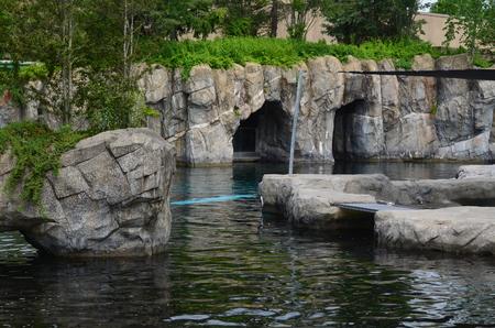 Whale in aquarium