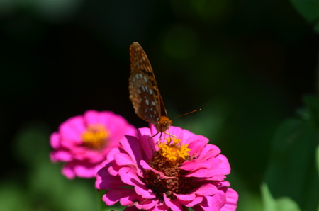 A butterfly on a plant Stock Photo
