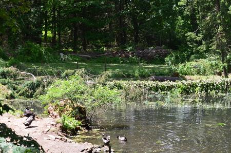 A fallen tree in a pond