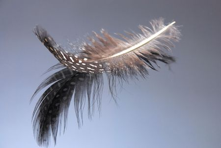 Picture of a single feather reflecting in the surfice Stock Photo - 4468943
