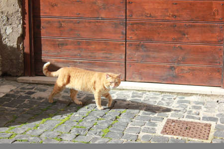 street with cobblestones and walking cat