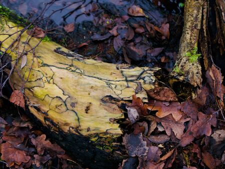 Decaying tree branch lying on brown autumn leaves