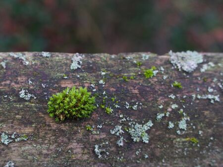 Contrasting shades of green moss and lichen on wall
