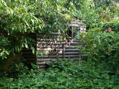 Old dilapidated wooden shed half hidden amongst trees and bushes