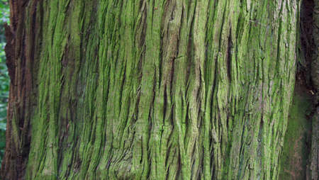 Green tree trunk background with copy space