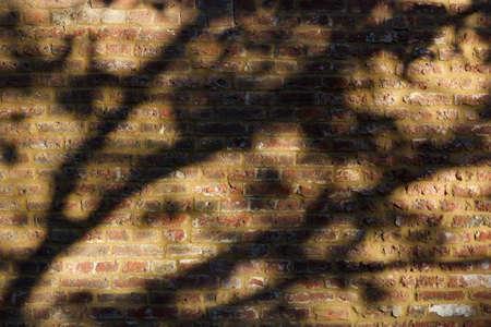 Shadow of tree in autumn against old weathered brick wall Zdjęcie Seryjne