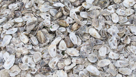Background of empty grey oyster shells with space for copy Foto de archivo