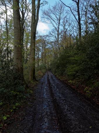 rainfall: A dirt road in a German forest after light rainfall.