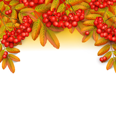 Rowan branch with orange leaves and red ashberry.
