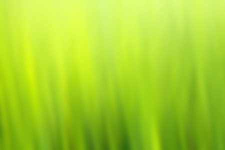 plant nature: blur background of green nature color Stock Photo
