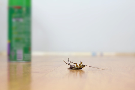 dead insect: Dead cockroach on floor with DDT