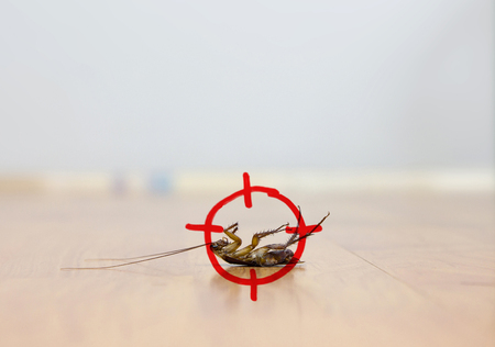 drawing of gun target to kill cockroach , pest control concept Stock Photo