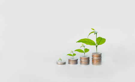 stack of coins growing up like plant , investment concept