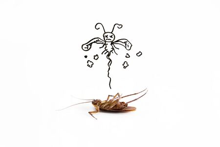 Dead cockroach on floor with drawing of dead sign Stock Photo