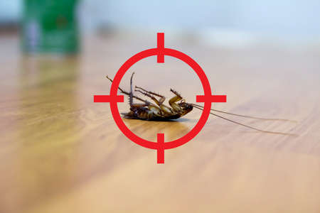 gun target to kill cockroach , pest control concept