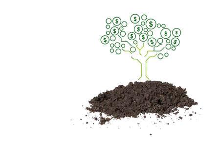 money tree growing , saving concept 写真素材